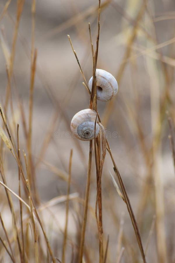 dos caracoles en el campo seco en verano imagenes de archivo
