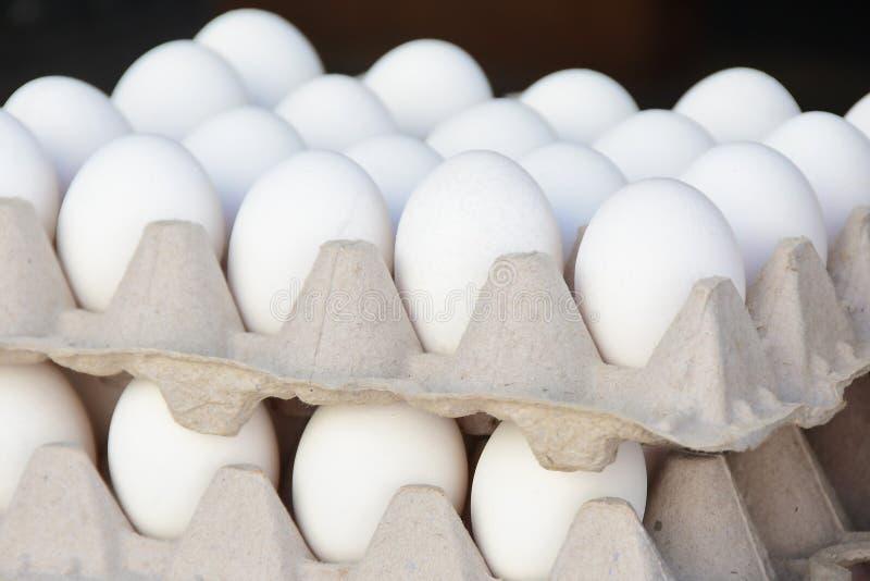 Dos cartones de los huevos orgánicos blancos foto de archivo libre de regalías
