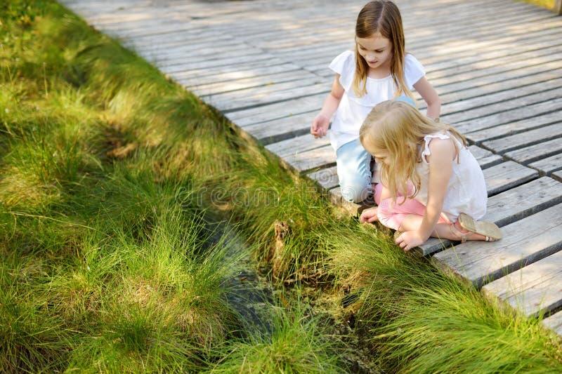 Dos chicas jóvenes adorables que cogen babyfrogs en bosque del verano foto de archivo libre de regalías