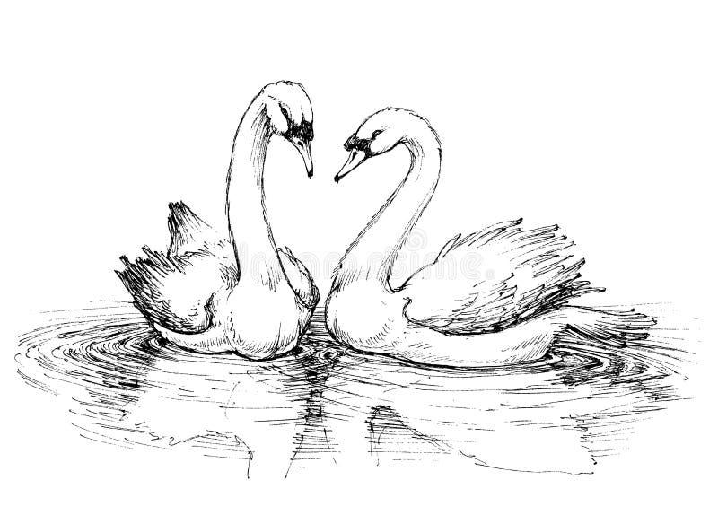 Dos cisnes en el lago stock de ilustración