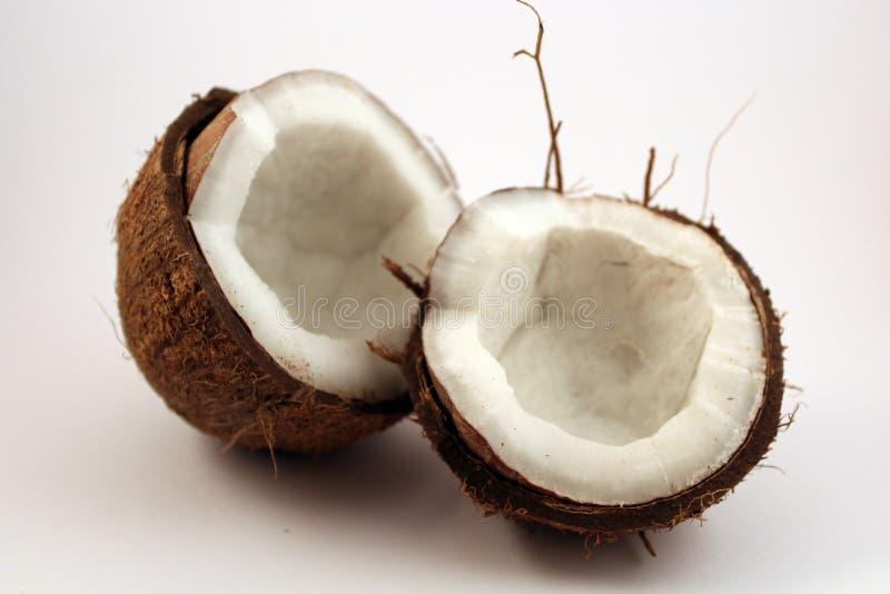 Dos cocos en el fondo blanco imágenes de archivo libres de regalías
