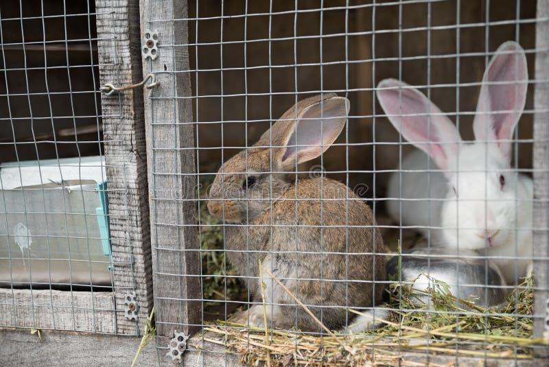Dos conejitos tristes que miran a través del marco del alambre de metal de la jaula fotos de archivo
