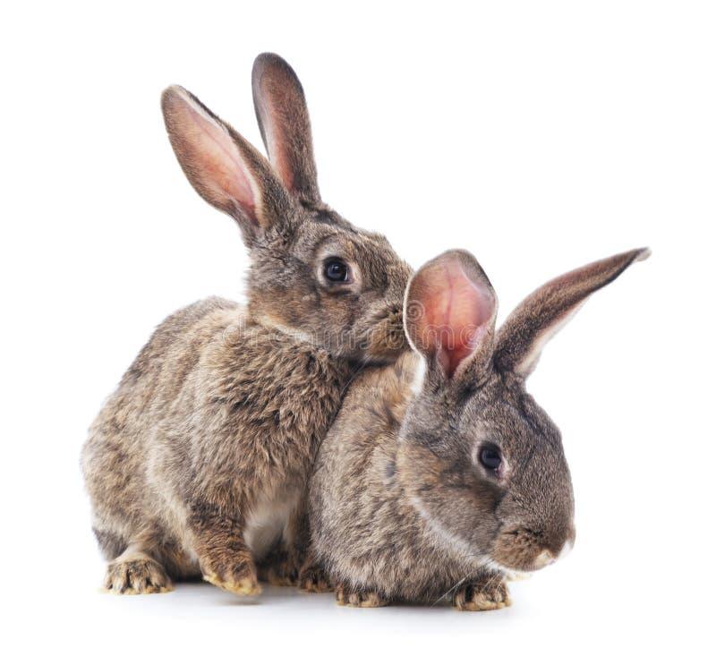 Dos conejos imágenes de archivo libres de regalías