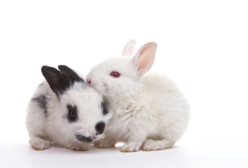Dos conejos fotografía de archivo