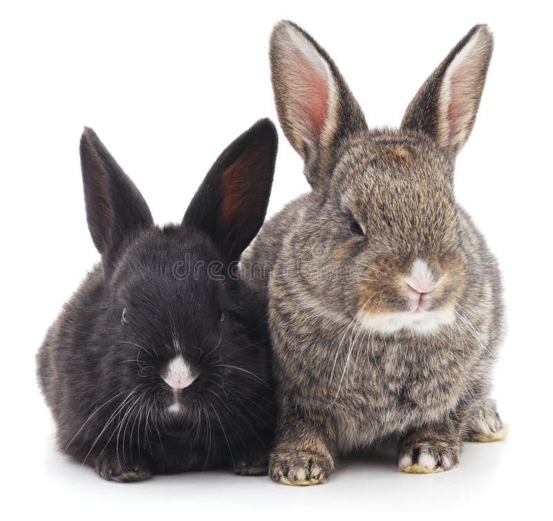 Dos conejos foto de archivo libre de regalías