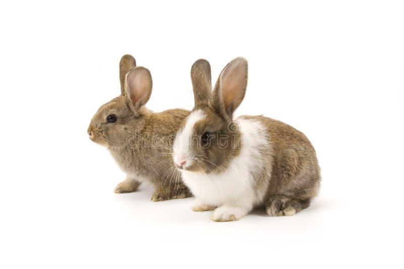 Dos conejos adorables fotografía de archivo