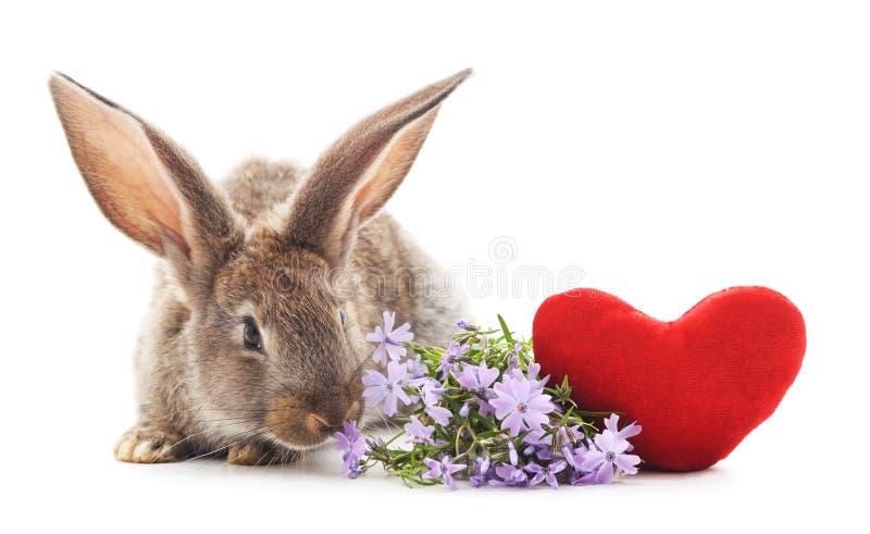 Dos conejos con el coraz?n del juguete fotos de archivo