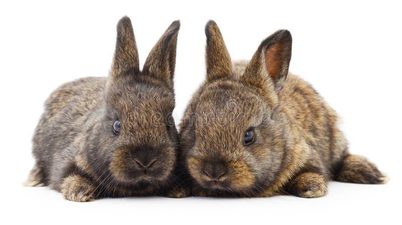 Dos conejos de conejito imagen de archivo