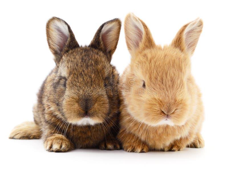 Dos conejos de conejito imágenes de archivo libres de regalías
