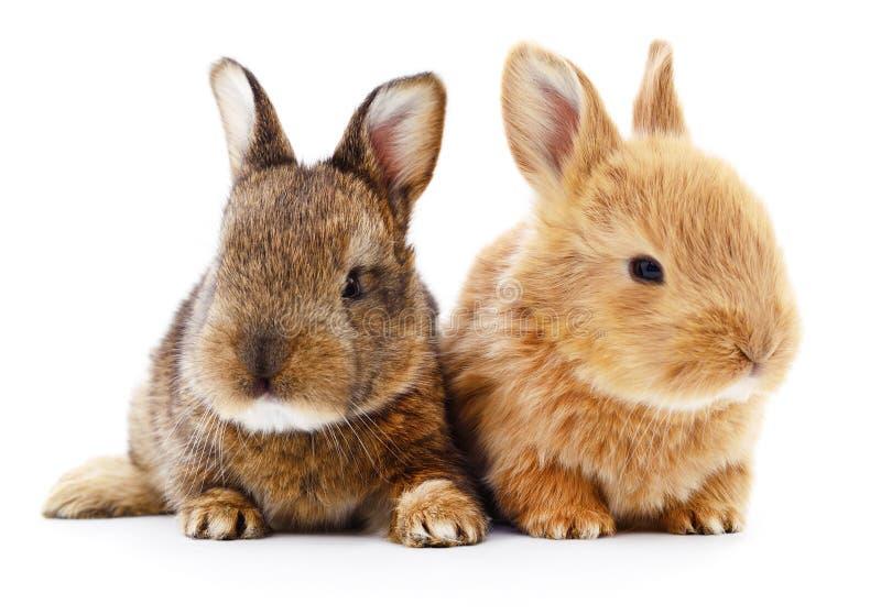 Dos conejos de conejito fotografía de archivo