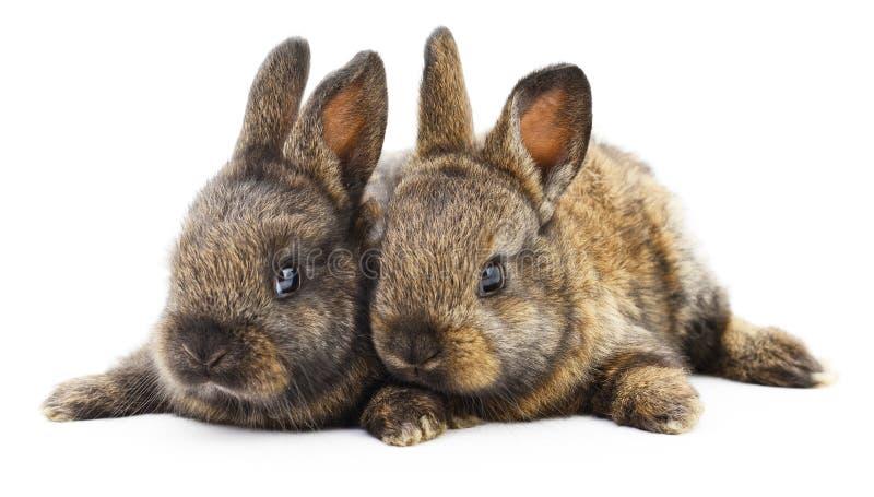 Dos conejos de conejito imagenes de archivo