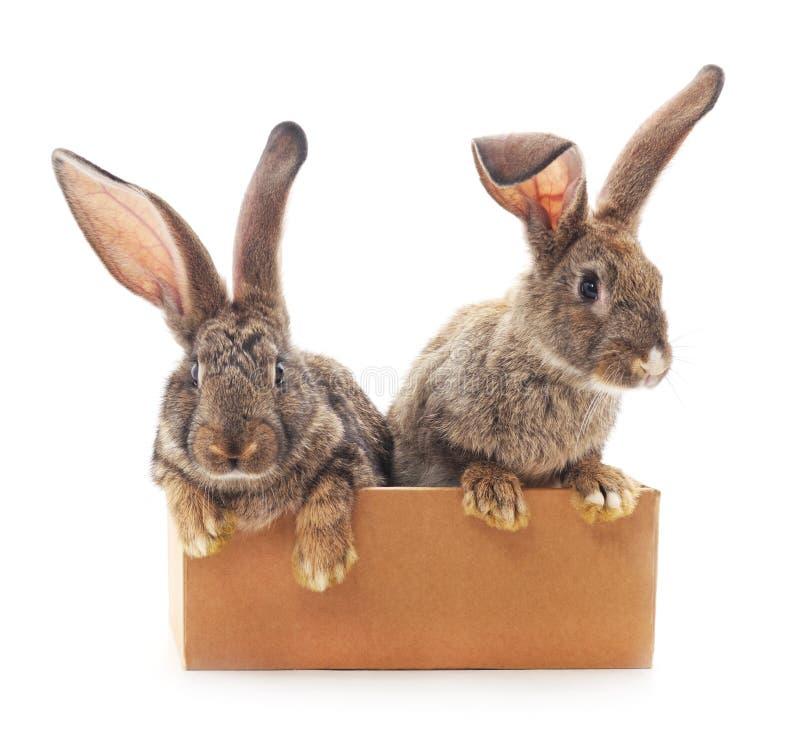 Dos conejos en una caja foto de archivo