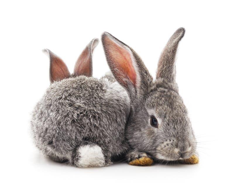 Dos conejos grises imágenes de archivo libres de regalías