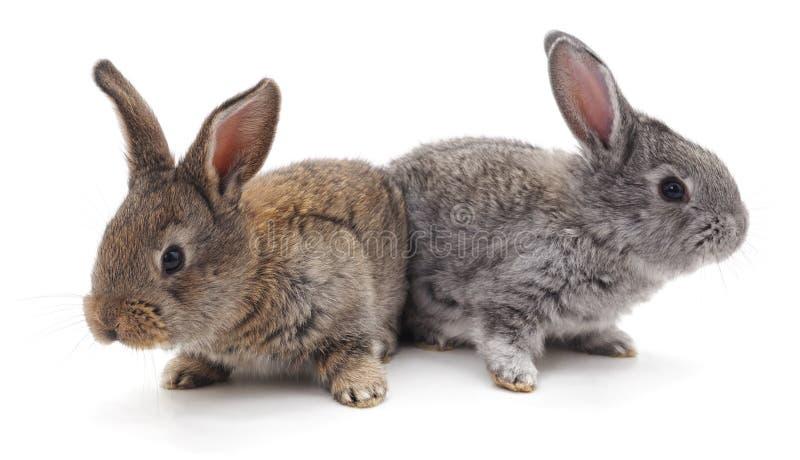 Dos conejos hermosos imagenes de archivo