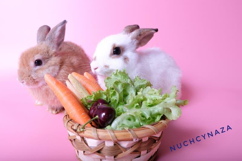Dos conejos jovenes, marrón y blanco, cerca de las frutas y verduras fotografía de archivo libre de regalías