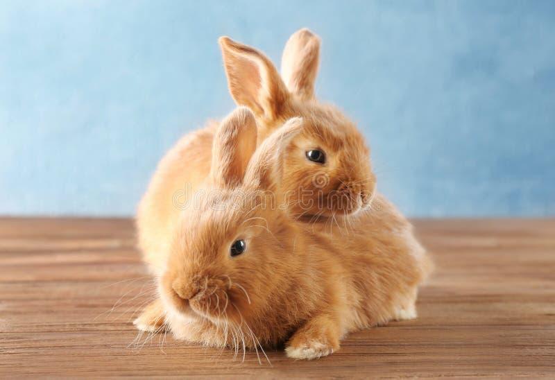 Dos conejos lindos en piso foto de archivo libre de regalías