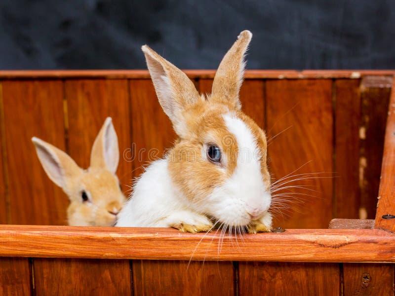 Dos conejos miran fuera de la jaula Conejo femenino con el baby_ foto de archivo