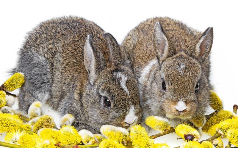 Dos conejos recién nacidos foto de archivo libre de regalías