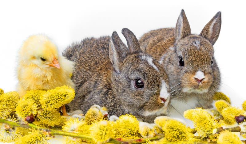 Dos conejos recién nacidos imagen de archivo libre de regalías