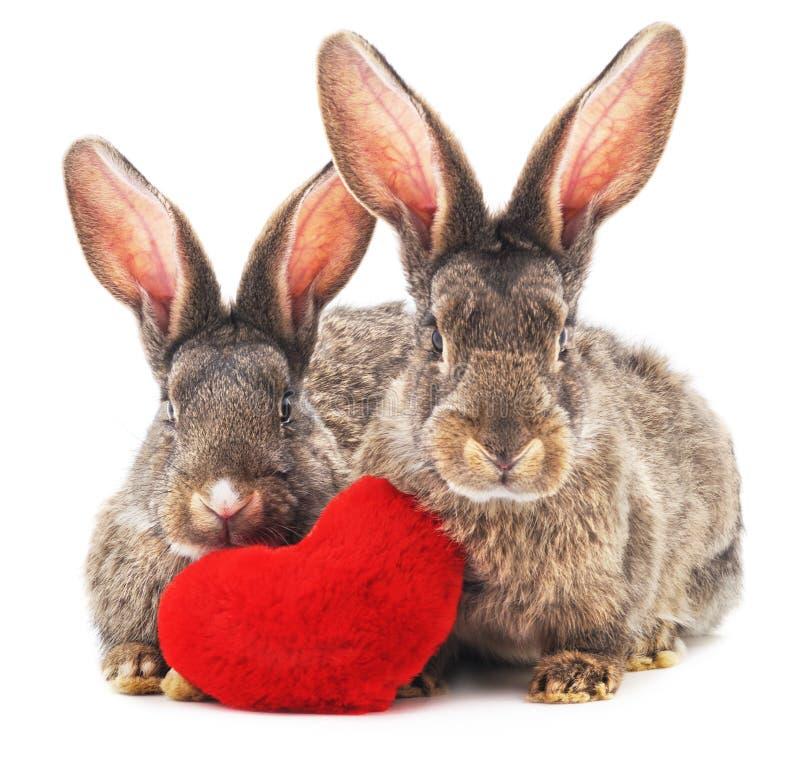 Dos conejos y corazones imagen de archivo libre de regalías