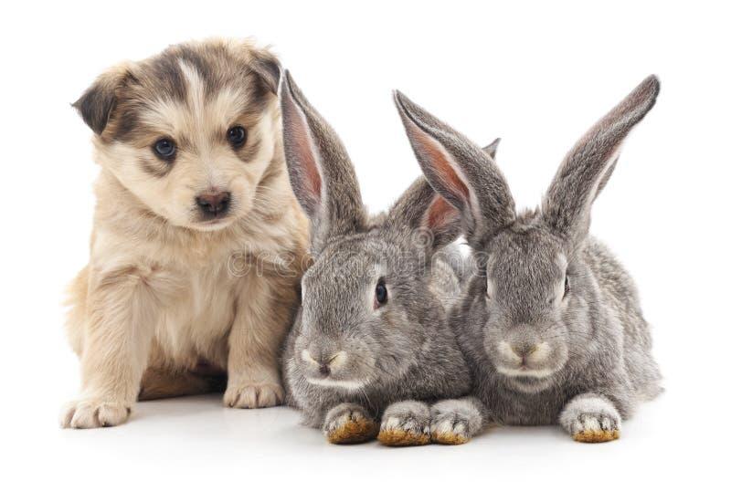 Dos conejos y perritos imagen de archivo