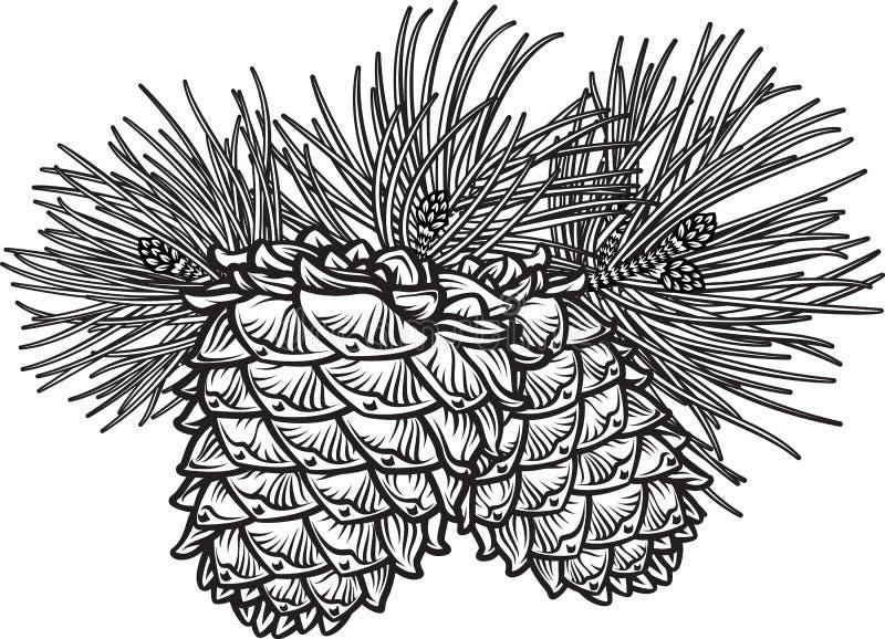 Dos conos del pino con las agujas libre illustration