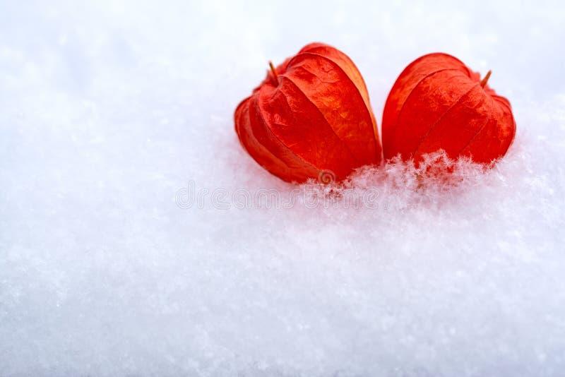 Dos corazones de physalis están mintiendo cerca en la nieve imagen de archivo libre de regalías