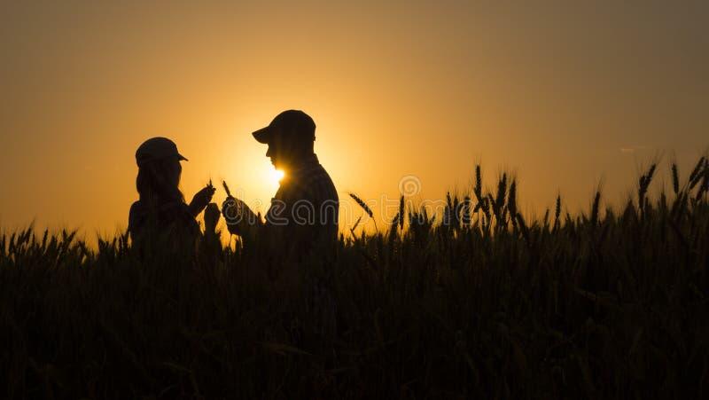 Dos cultivadores del grano que trabajan en un campo de trigo en la puesta del sol fotografía de archivo libre de regalías