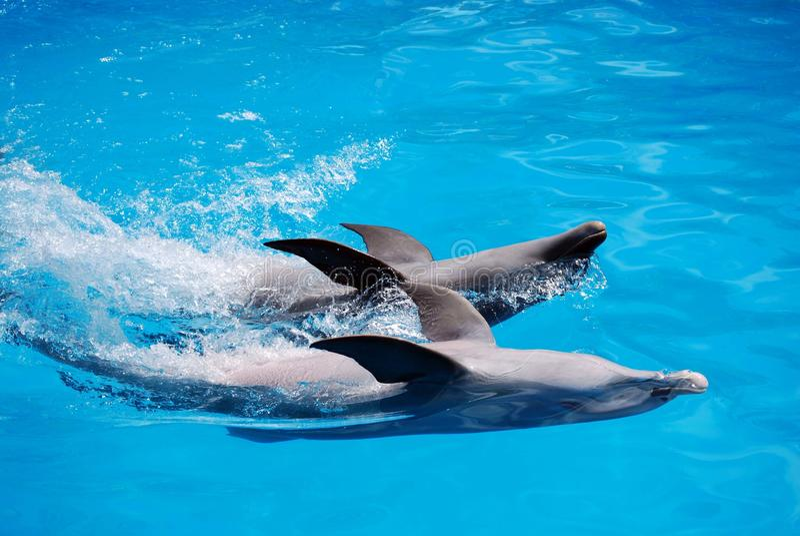 Dos delfínes imágenes de archivo libres de regalías