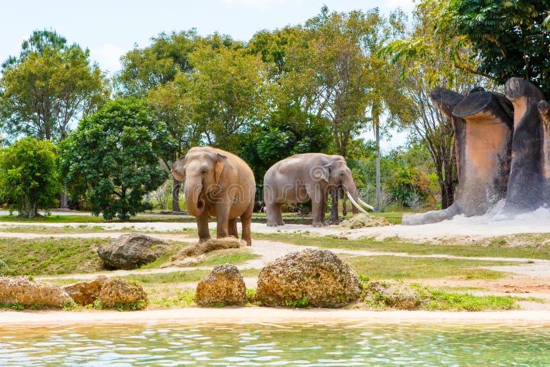 Dos elefantes en un parque zoológico en día soleado caliente imagenes de archivo