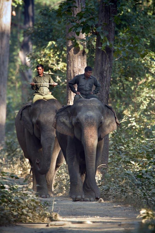 Dos elefantes nacionales con los mahouts en Nepal fotos de archivo