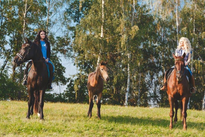 Dos equestrians femeninos con los caballos y el potro marrones criados en línea pura entre ellos fotos de archivo libres de regalías