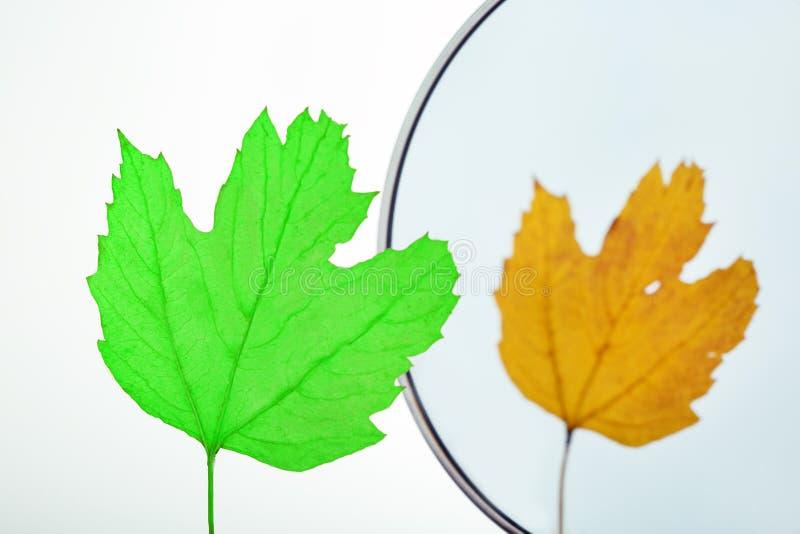 Dos estaciones, primaveras y otoños Concepto humano del envejecimiento Licencia verde que mira en mirro fotografía de archivo