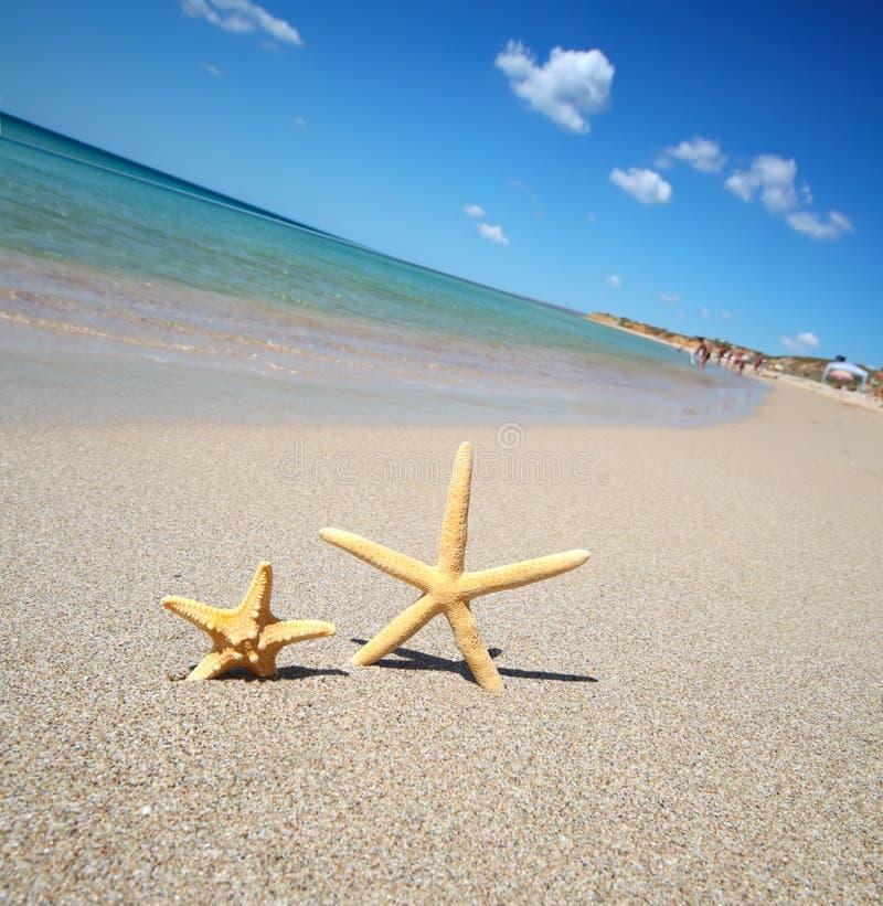 Dos estrellas de mar imagenes de archivo