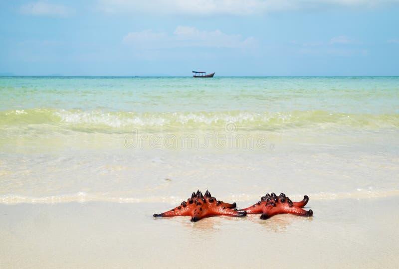 Dos estrellas de mar en la playa, el mar azul y un barco imagen de archivo