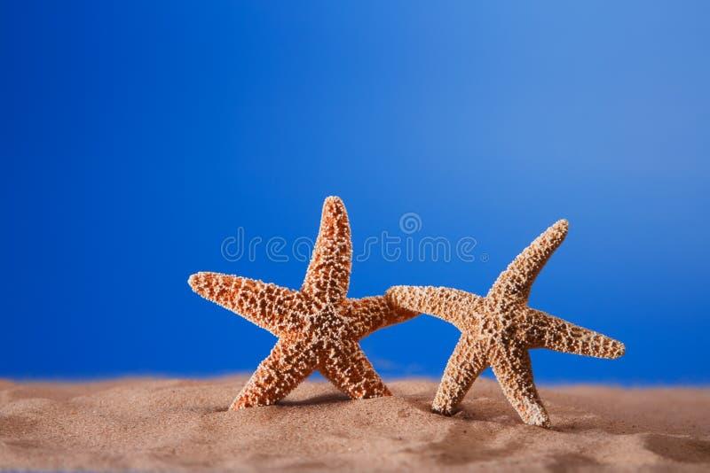 Dos estrellas de mar en una arena de la playa foto de archivo libre de regalías