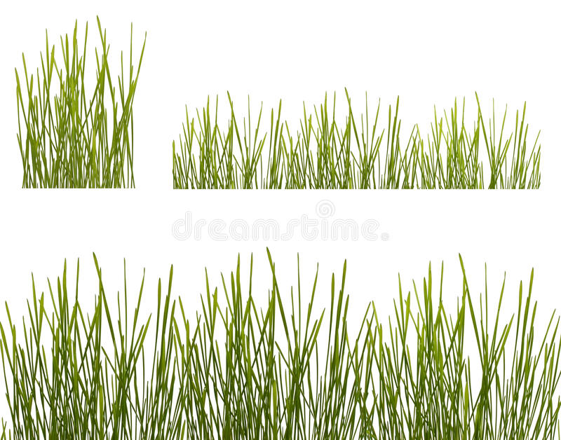 Dos Filas De La Hierba Verde En Blanco Fotos de archivo