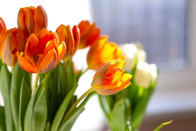 Dos floreros de tulipanes de la primavera en la tabla fotos de archivo