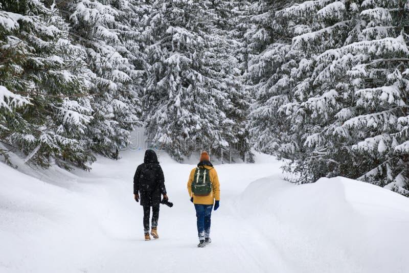 Dos fotógrafos están viajando en bosque fotos de archivo libres de regalías