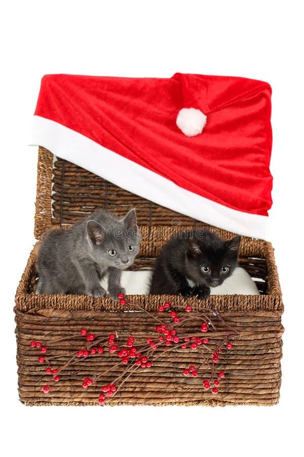 Dos gatitos adorables, grises y negros que miran furtivamente curiosamente fuera de una cesta de mimbre con la decoración roja si fotografía de archivo libre de regalías