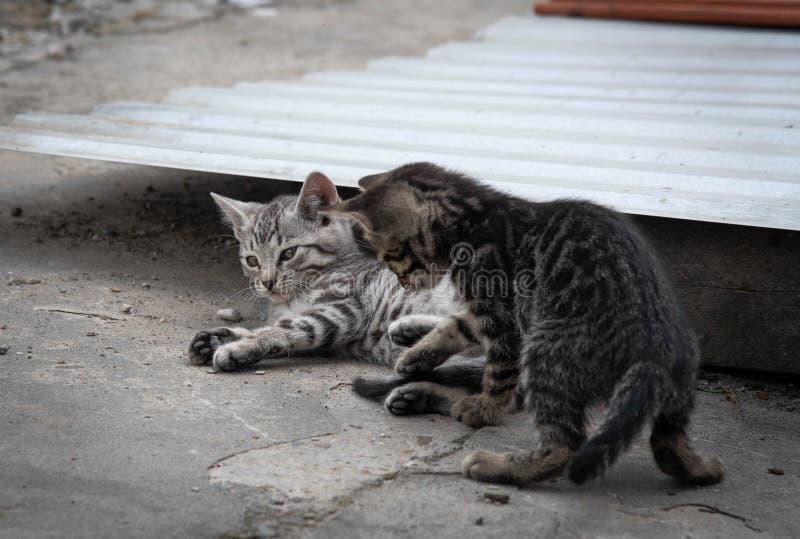 Dos gatitos adorables jugando al aire libre. Gatitos al aire libre imágenes de archivo libres de regalías