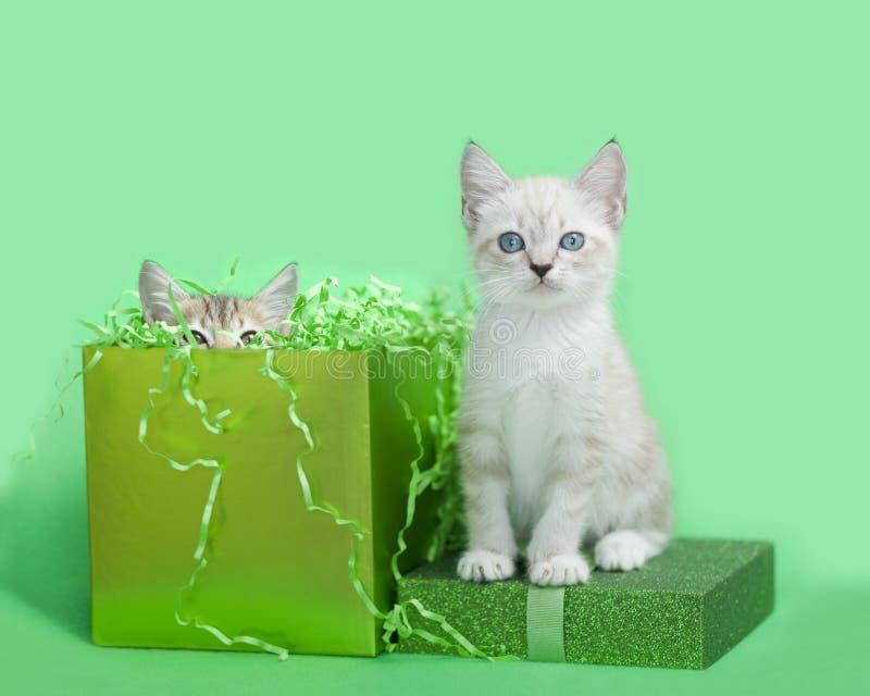 Dos gatitos con un presente de cumpleaños verde foto de archivo libre de regalías