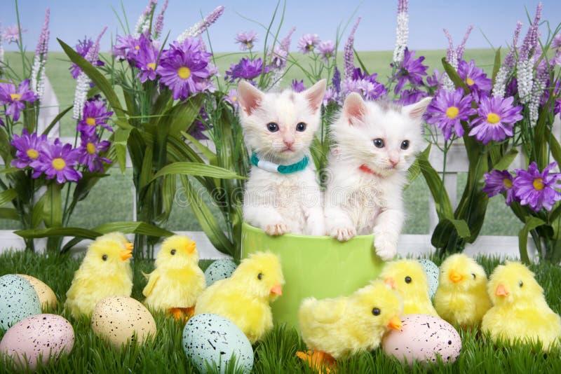 Dos gatitos de Pascua en un jardín de flores foto de archivo libre de regalías