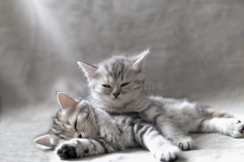 Dos gatitos divertidos foto de archivo