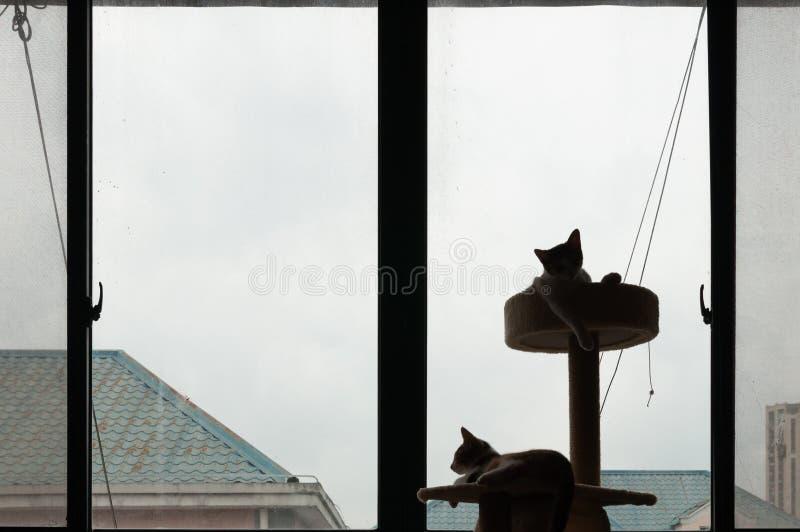 Dos gatitos en árbol del gato por la ventana imagen de archivo