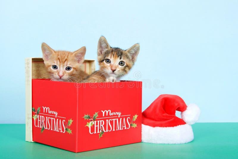 Dos gatitos en una caja de la Navidad foto de archivo