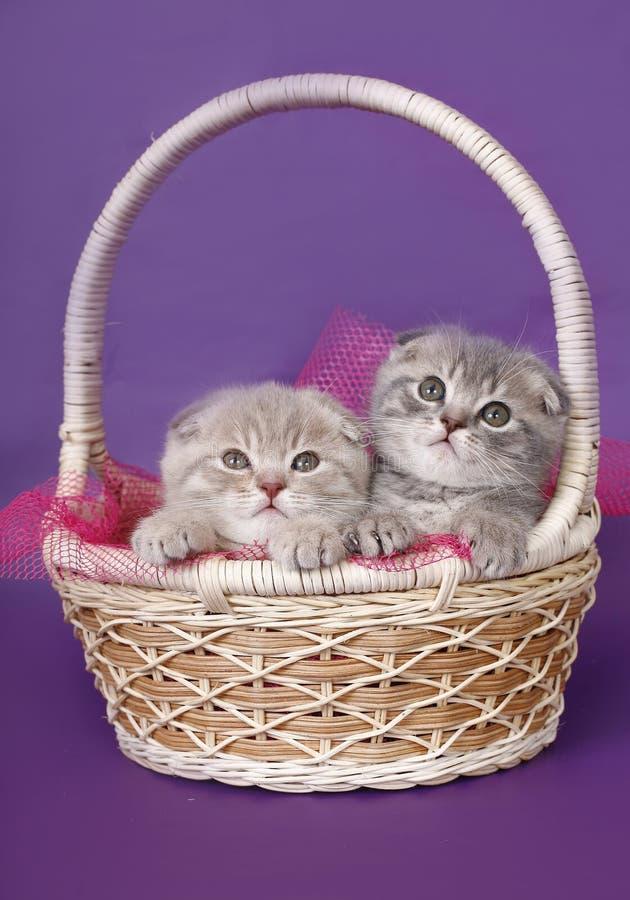 Dos gatitos en una cesta. foto de archivo libre de regalías