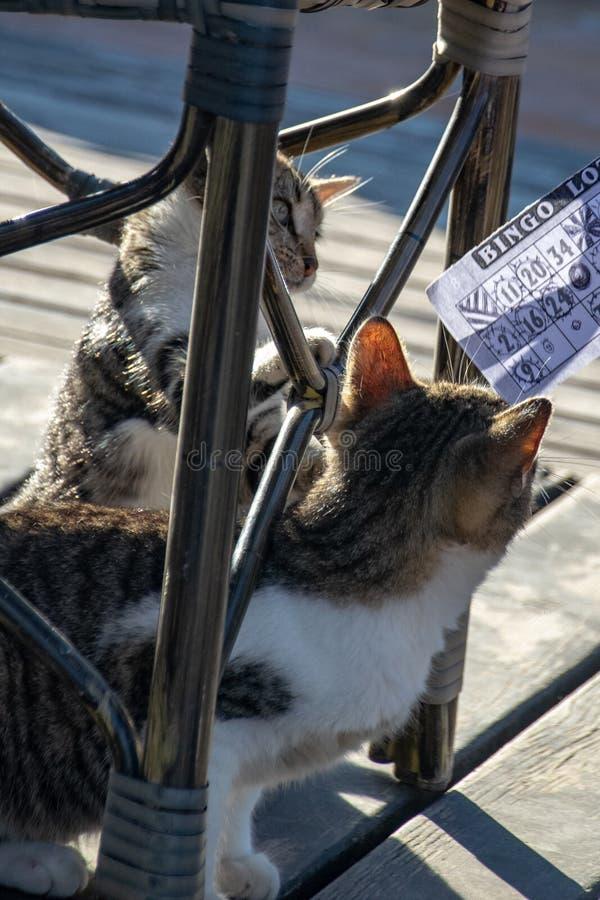 Dos gatitos juguetones del gato de gato atigrado cautivadores por el pedazo de papel terminado del bingo imágenes de archivo libres de regalías
