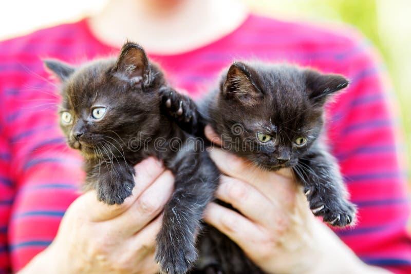 Dos gatitos negros en las manos del hombre Acaricia concepto fotos de archivo