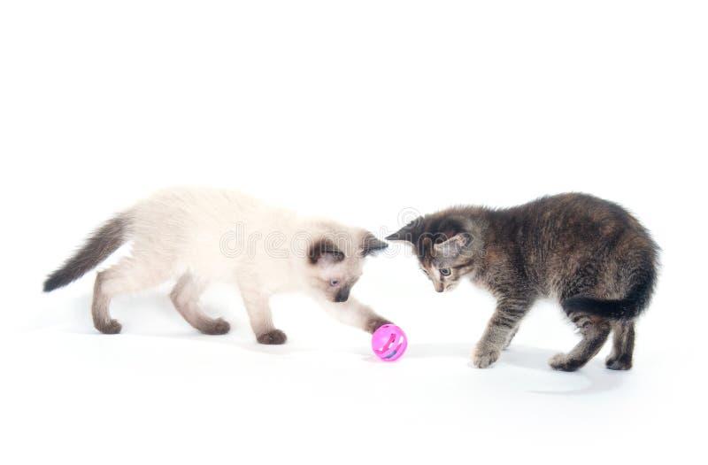 Dos gatitos que juegan con la bola rosada fotografía de archivo